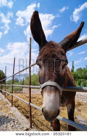 A cute donkey in the countryside on a sunny summer day, Mallorca poster