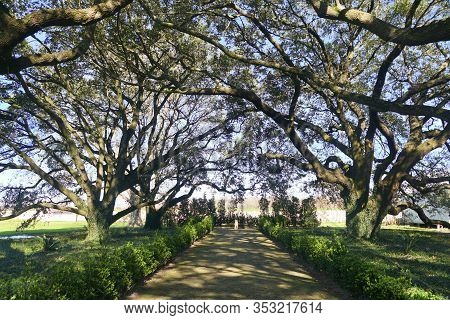Edgard, Louisiana, U.s.a - February 2, 2020 - The Old Oak Trees By The White Mansion Of Whitney Plan