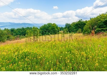 Mountain Meadow. Beech Forest On The Edge Of A Hill. Beautiful Summer Landscape With Fluffy Clouds O