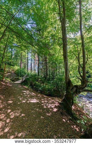 Forest Trail On The Hillside. Beautiful Nature Scenery With Beech Trees On A Sunny Day. Wooden Bridg