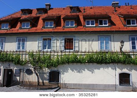 House Of The Oldest Vine