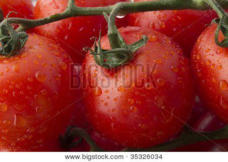 Fresh Ripe Tomatoes on the Vine