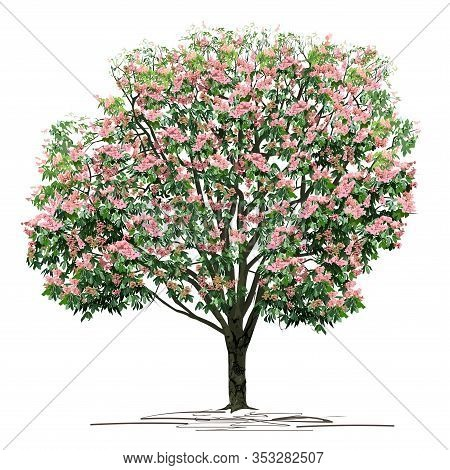 Flowering Chestnut (castanea L.) Tree With Pink Colors, Colored Vector Image On White Background