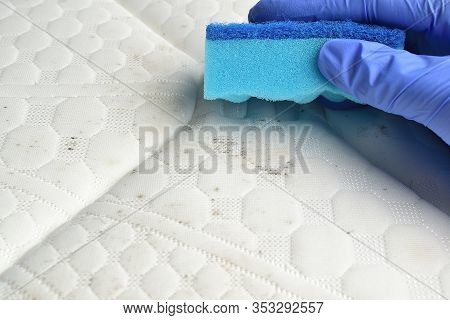 Removing Mould Stains From The Mattress With A Sponge. Fungus, Mildew, Mold Or Dust.