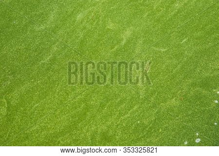 Bog Covered With Green Ooze. Texture Of Green Swamp Ooze With Insect. Green Swamp Mud With Insect An