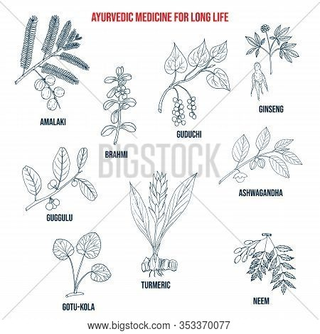 Ayurvedic Herbs For Long Life, Natural Botanical Set. Hand Drawn Vector Illustration