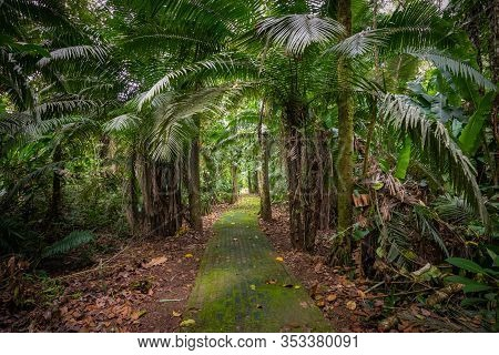 Amazon. Tropical Rainforest. Jungle Landscape. Amazon Yasuni National Park, Ecuador. South America.