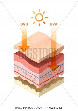 Uvb Uva Rays From Sun Penetrate Into Epidermis Of Skin Cross-section Of Human Skin Layers Structure