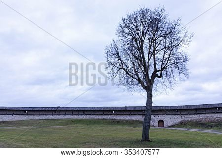 Alone Tree On The Internal Lawn Of The Medieval Castle, Citadel Or Fortress In Cloudy Spring Or Autu