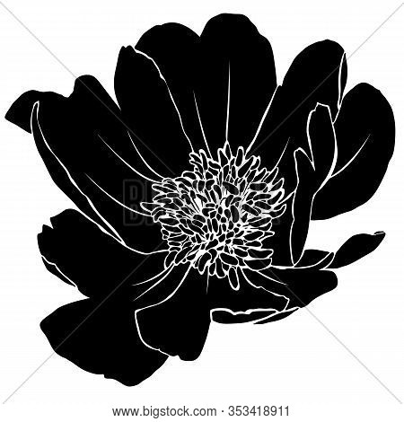 Silhouette Of Flower Of Peony. Black Image Isolated On White Background