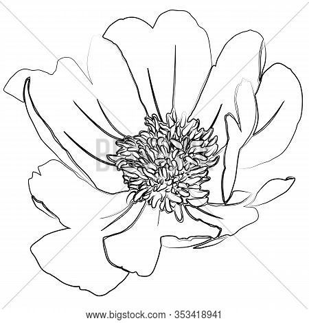 Silhouette Of Flower Of Peony. Outline Image Isolated On White Background