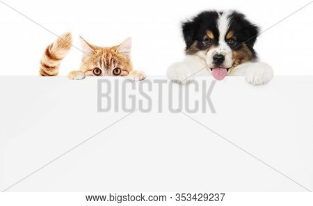 Pets Store Concept, Puppy Dog And Pet Cat Together Showing A Placard Display Isolated On White Backg