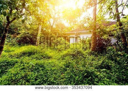 Bamboo Forest. Asian Bamboo Forest With Morning Sunlight. Sun Breaks Through The Leaves Of A Tropica