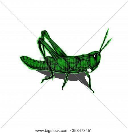 Simple Design Of Illustration Grasshopper On White Background