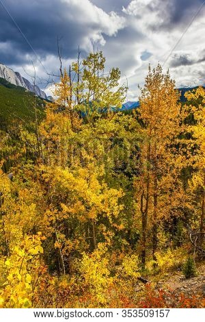 Orange, yellow and red leaves of aspens and birches. Cloudy fall day in the Canadian Rockies. Miette Hot Springs - The Hottest Springs in the Rockies. Concept of active, eco and photo tourism