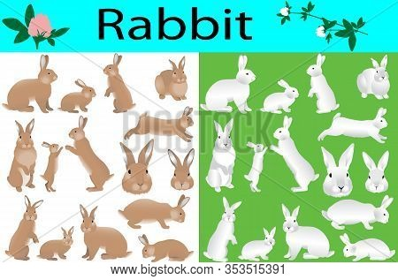 Collection Of Rabbits And Its Cubs In Colour Image
