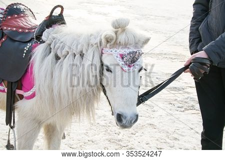White Pony With A Black Saddle And A Unicorn Horn. Mockery Exploitation And Abuse Of Animals. Man Ho