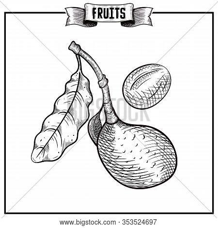 Chalk Hand Drawn Vintage Style Vector Illustration Of Isolated Fruit. Persea Americana, Avocado, Avo