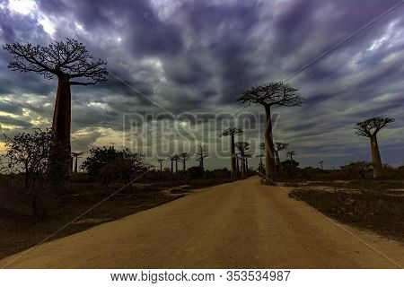 Baobab Trees, Baobabs Forest - Baobab Alley, Morondava, Madagascar. Sunset