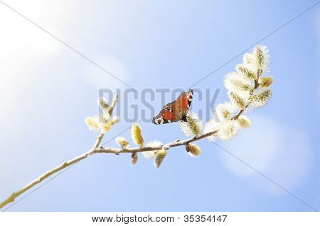 Brown Butterfly Sitting On Lamb's Tails With Sky