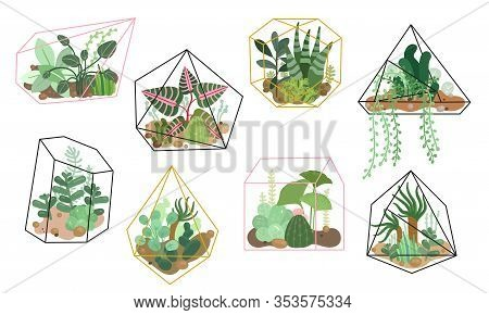 Succulents Plants. Stylish Floral Decor, Home Garden. Modern Interior Natural Decoration, Cactus Pla