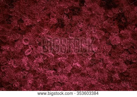 Floral Texture. Natural Decorative Patern, Flowers Of Roses, Lush Lava Color, Bright Design Backgrou