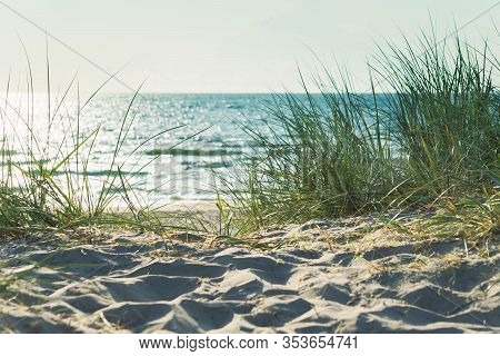Sand Dunes With Grass In Noon Sunlight On Sandy Beach. Beautiful Sunny Seascape. Landscape Of Baltic