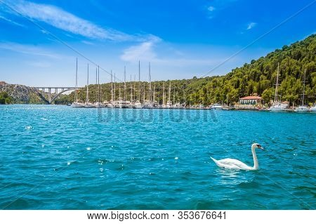 Swan On Lake In Krka National Park, Croatia. Yachts And Boats At Pier In Skradin. Sibenik Bridge Ove