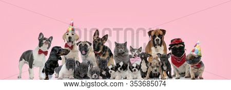 Large team of domestic animals posing wearing birthday hats, bowties and sunglasses, sitting, standing and laying down on pink background