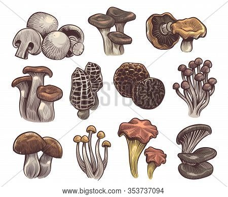 Hand Drawn Mushrooms. Colorful Sketch Forest Mushroom Champignon And Truffle, Trumpet And Chanterell