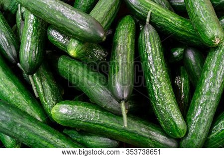 A Lot Of Cucumbers Are In A Box In The Store. Cucumber Harvest And Healthy Food