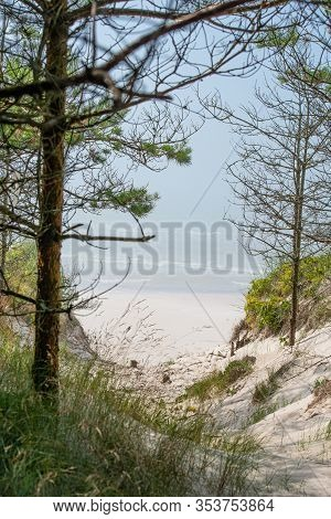 Baltic Sea Shore In Latvia. Sand Dunes With Pine Trees. Typical Baltic Beach Landscape