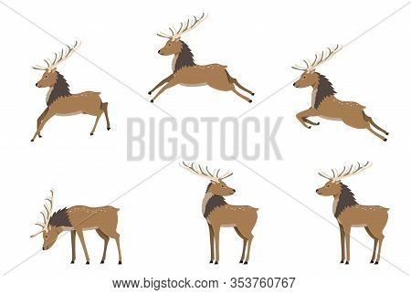 A Set Of Deers In Differet Poses. Deer Jump, Fly And Stand. Cute Deer With Antlers In Flat Cartoon S