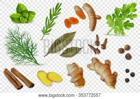 Realistic Dry Spices Roots Herbs Transparent Set
