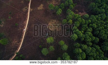 Aerial View Of Jungle Trail And Plain Of Pine Forest