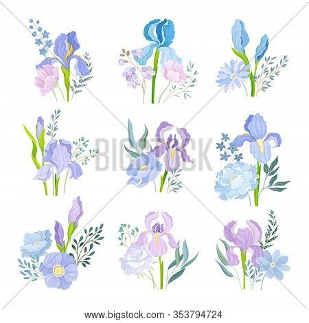 Floral Compositions With Purple Iris Flowers On Green Erect Stem Vector Set