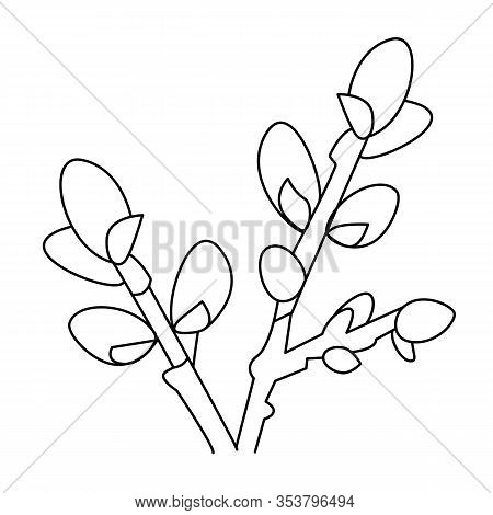 Sprig Of Willow In Hand Drawn Doodle Style Isolated On White Background. Design Easter Card, Colorin