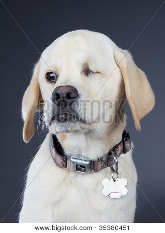 White Dog With Defective Eye Because Of Abuse
