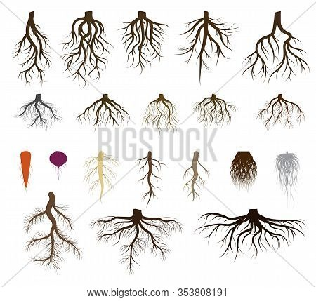 Root System Set Vector Illustrations. Taproot And Fibrous Rooted Brown Silhouettes Of Various Plants
