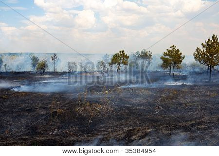 Burnt Surface Of The Earth After A Forest Fire