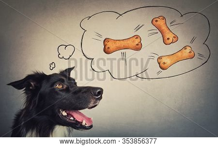 Joyful Border Collie Dog Looking Aside, Dreaming Of Tasty Bone Shaped Biscuits. Funny Astonished Pup