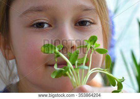 Girl Eats Sunflower Microgreen, Spring Avitaminosis.sprout Vegetables Germinated From High Quality O