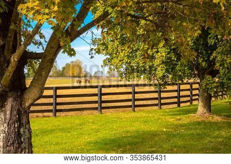 Horses At Horse Farm. Country Autumn Landscape.
