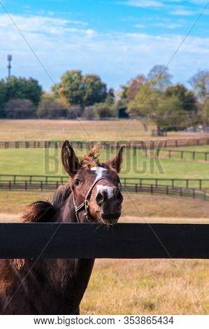 Horse At Horse Farm. Country Autumn Landscape.