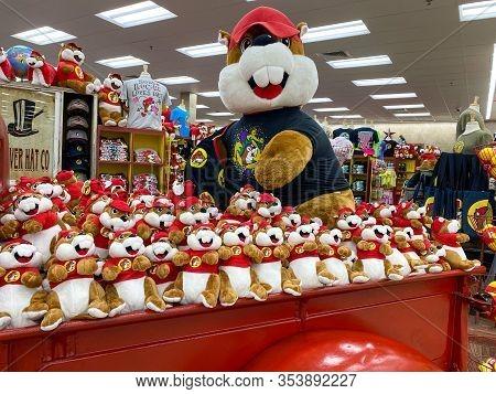 Houston, Tx/usa-2/25/20:  A Bin Full Of Stuffed Bucees Beaver Mascot At A Buc Ees.  The Buc Ees Gas