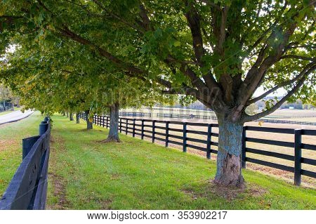 Line Of Trees Along The Horse Farms.  Country  Landscape.