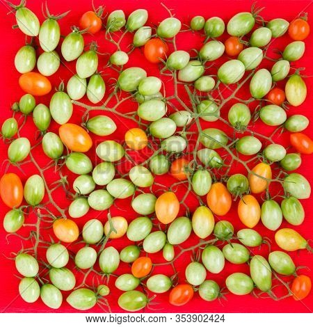 Green And Red Grape Tomatous On Vine. Natural Background.
