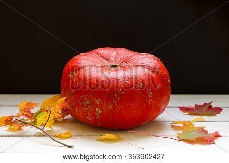 Decorative Pumpkin, Autumn Season Background.