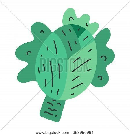 Green Cabbage Vegetable Isolated. Cabbage For Farm Market, Vegetarian Salad Recipe Design. Vector Il