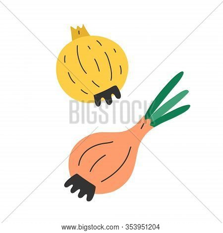 Raw Onions Isolated, Fresh Organic Vegetable, Vector Icon Illustration, Onions With Leaves And Stem,